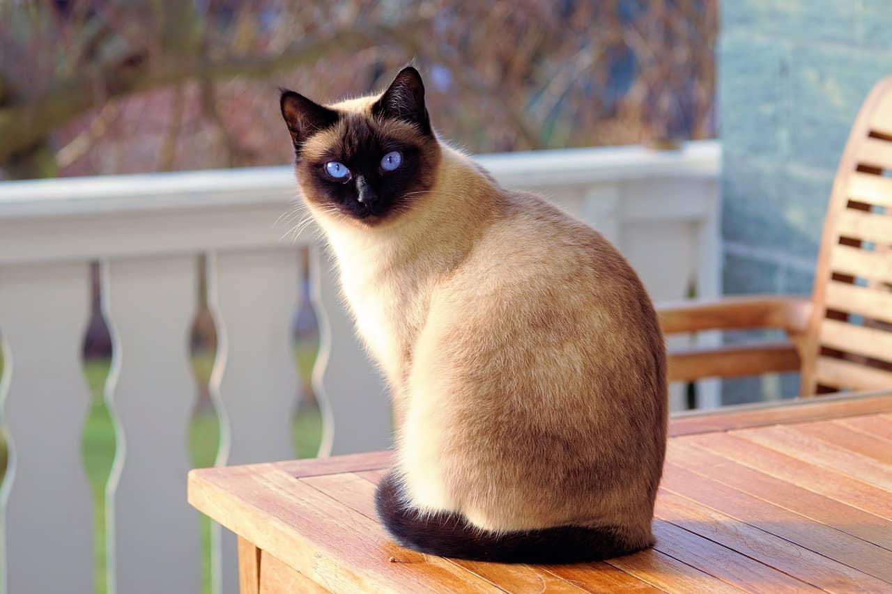 cat at the balcony